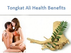 Benefits of Tongkat Ali for Sex & Penis
